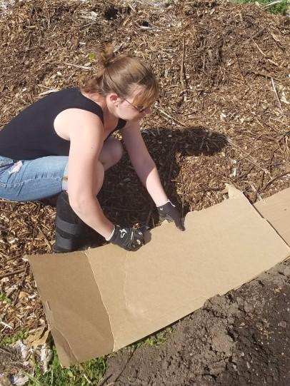 sheet mulching lesson 1