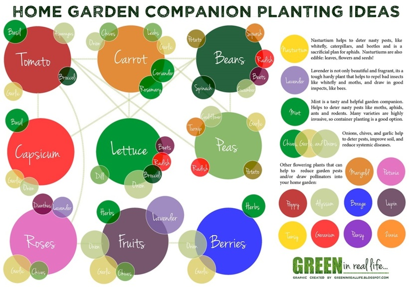 Companion Planting Guide Plant Combinations and Ideas for the Home Garden